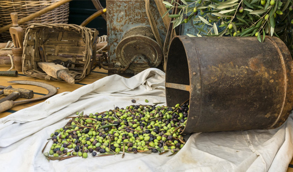 olio di oliva extravergine taggiasco